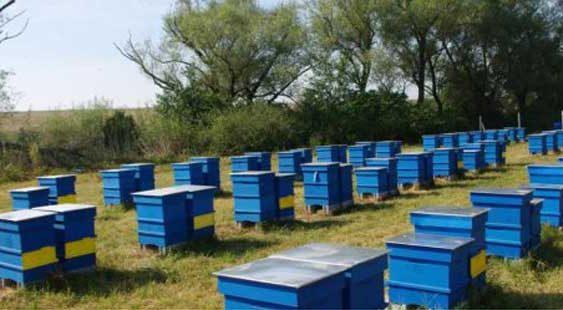 Пчелниот парк во Вешје потенцијал за иден Апицентар во регионот