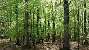 Photo of Македонски шуми: Навреме ќе бидат испорачани дрвата за огрев