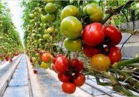 Градинарство -земјоделски календар за месец јуни