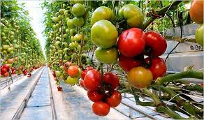Photo of Градинарство -земјоделски календар за месец јуни