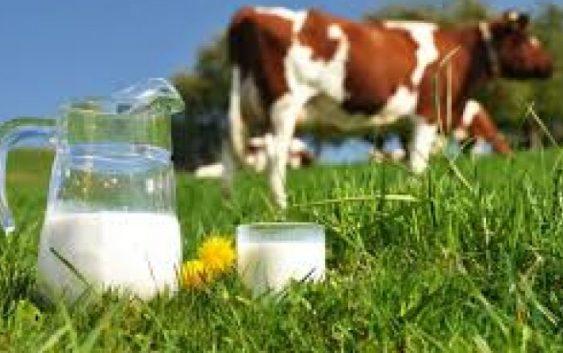 Инвестиции во модернизација на млекопроизводството во Пелагонија
