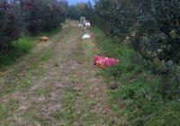 Агрометеоролошките станици во Преспа го намалија прскањето на јаболката до 30 проценти