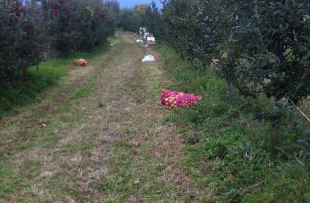 Photo of Агрометеоролошките станици во Преспа го намалија прскањето на јаболката до 30 проценти
