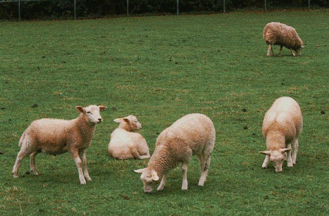 Photo of Наскоро ќе биде познато дали има ефект од земјоделските субвенции