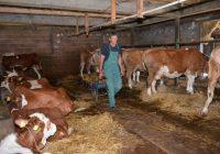 Сточарите се жалат растат трошоците за производство на млеко цената паѓа а субвенциите доцнат