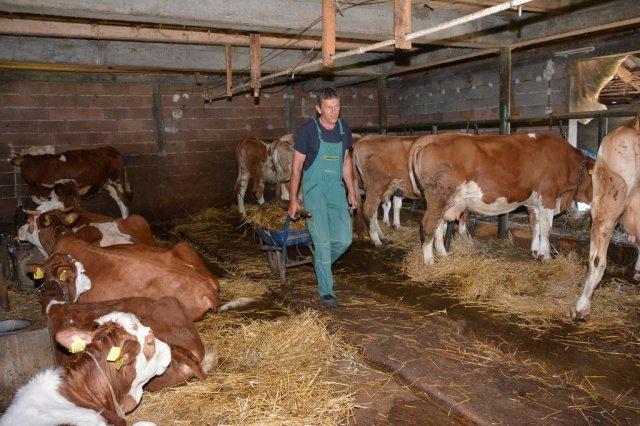 Photo of Сточарите се жалат растат трошоците за производство на млеко цената паѓа а субвенциите доцнат