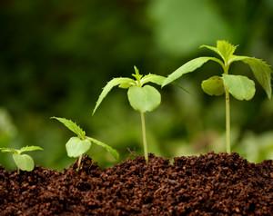 Гарантен Фонд за земјоделски кредити ќе има наскоро