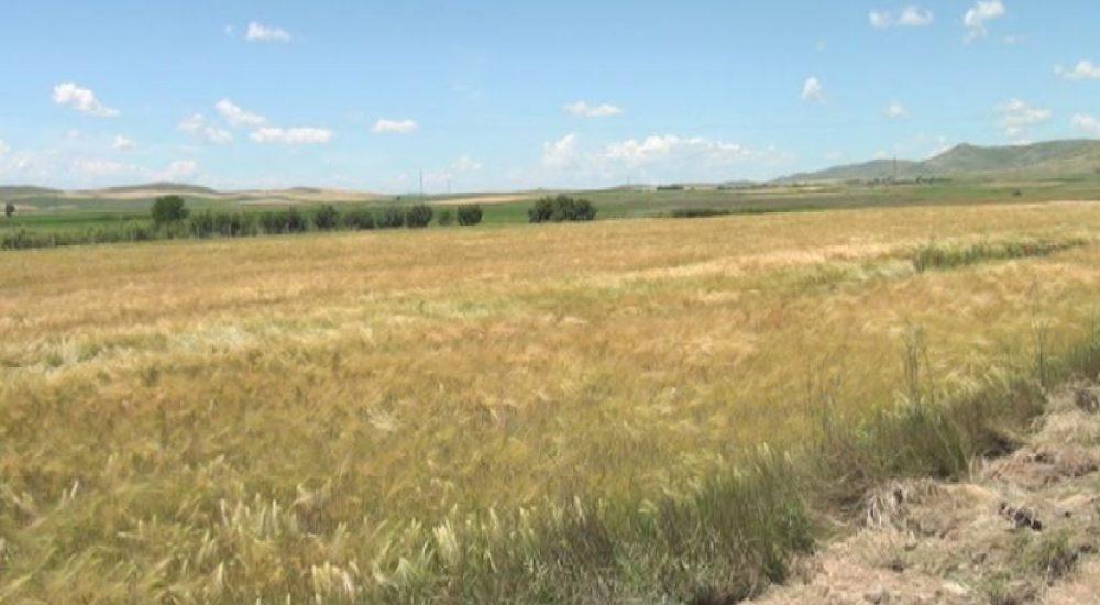 Photo of Стартува жетвата на житните култури