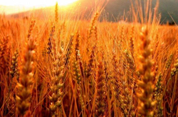 Photo of Министерството за земјоделство ја следи состојбата со житните култури