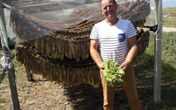 Пламеница се заканува да го уништи тутунот, а земјоделците не можат да го осигурат родот, се жали тутунарот Јоце Здравески од Мусинци