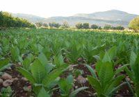 Јавен повик за учество во пилотни активности за диверзификација и подобрување на ефикасноста на земјоделските стопанства во Македонија