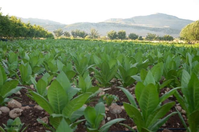 Photo of Јавен повик за учество во пилотни активности за диверзификација и подобрување на ефикасноста на земјоделските стопанства во Македонија