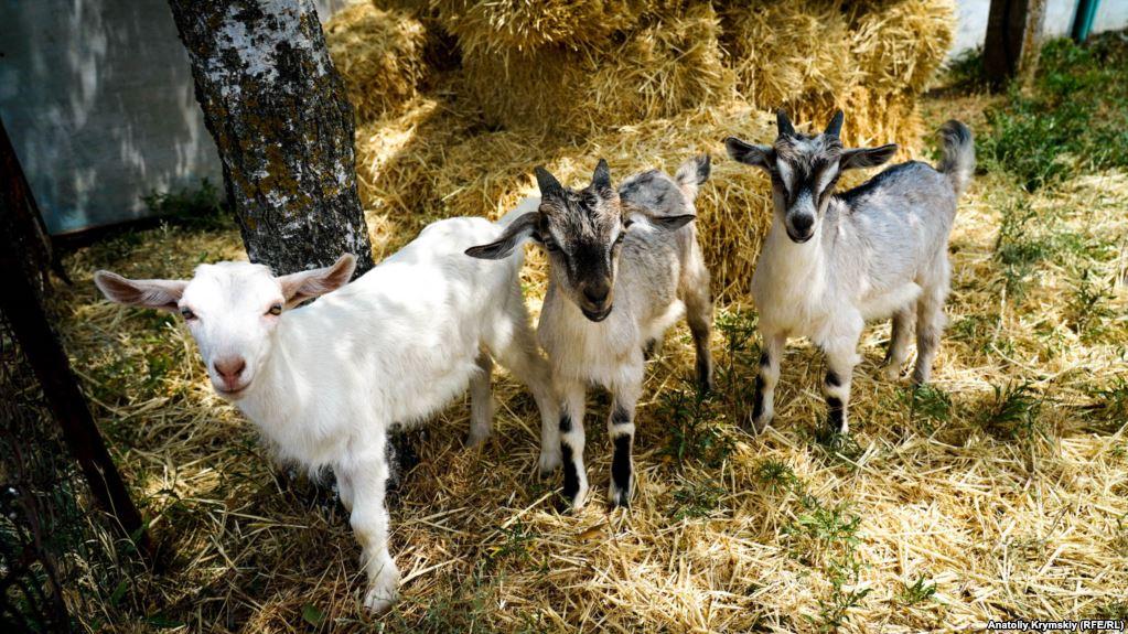 Photo of Забрана за увоз на овци и кози и производи од нив од Бугарија поради чума