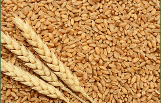 Прва официјална цена на родот на пченицата за 2018 на берзата на производи во Нови Сад