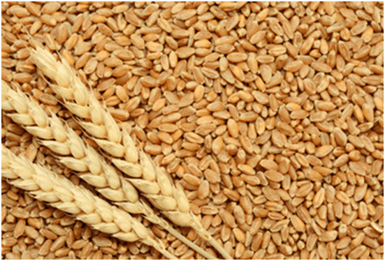 Photo of Прва официјална цена на родот на пченицата за 2018 на берзата на производи во Нови Сад