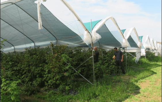 Од капини, малини и јагоди – може да се живее!