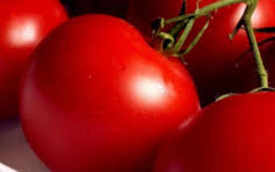 Земјоделците се жалат на променливи откупни цени на градинарските култури