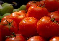 Косово утре ќе одлучи дали ги сака македонските домати и пиперки