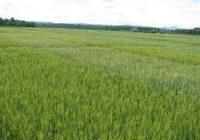 Земјоделски календар за месец Јули- поледелство