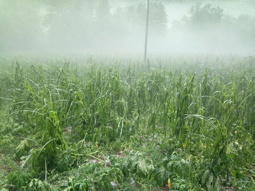 Photo of И до 10.000 евра штети во земјоделството од минатонеделното невреме