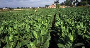 Photo of Од невремето во Могила најмногу настрада тутунот