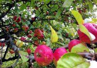 Земјоделците во Преспа беа запознаени со придобивките од здружувањето во задруги