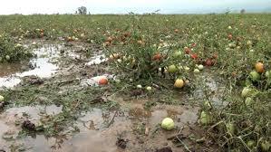 Photo of Државата пет години со ред не им ги исплаќа штетите од невремето на пелагониските земоделци
