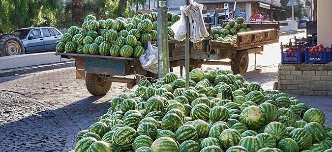 Photo of Производителите на лубеници со блокади бараат повисоки откупни цени