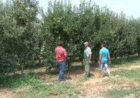 Овоштарите од Преспа бараат враќање на градобијната заштита