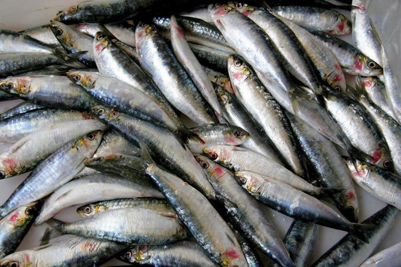 Photo of МЗШВ: Новите концесии гарантираат заштита на рибите во риболовните води