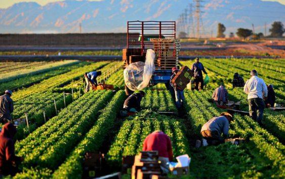 Министерството за земјоделство бара Косово итно да ги повлече одлуката за повисока царина