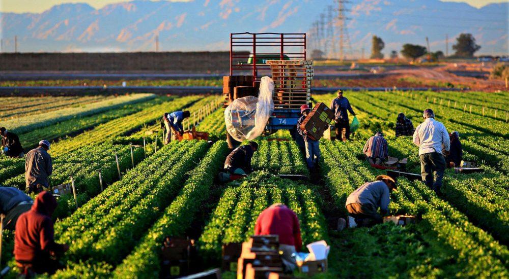 Photo of Министерството за земјоделство бара Косово итно да ги повлече одлуката за повисока царина