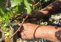 И во Македонија се бараат сезонски работници: Дневница по 1.000 денари за берење на јаболка, грозје, аронија…