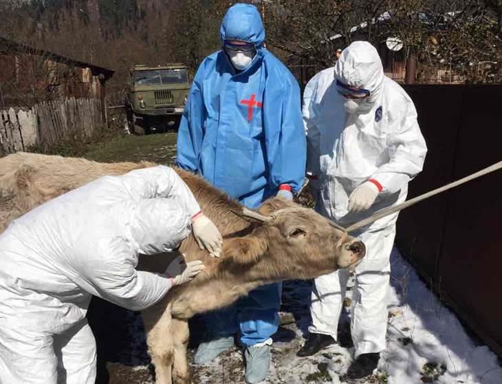 Photo of Методологија помага да се процени цената на справување со болестa Јазлеста кожа кај говедата