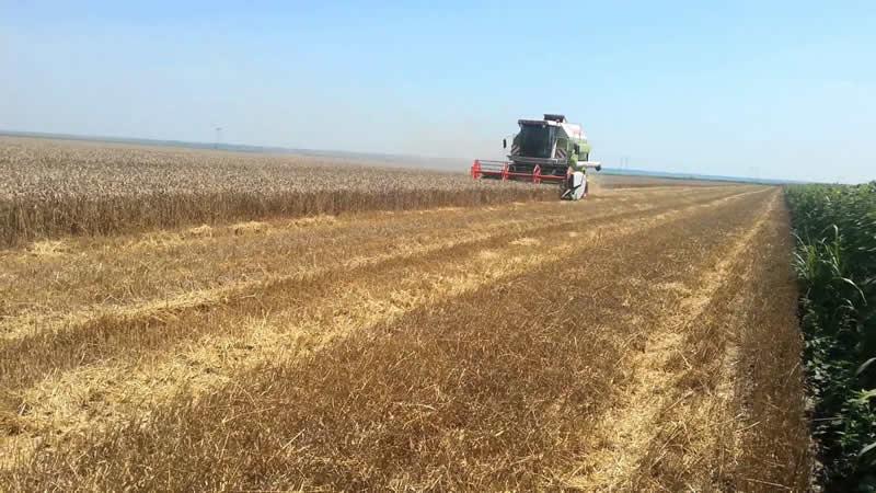 Photo of ЖЕТВАТА ВЕЌЕ ПОЧНУВА, А ПЧЕНИЦАТА НЕМА ЦЕНА: Родот на житото е добар, ама дали ќе се офајдат земјоделците?