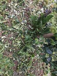 Photo of Овоштарите од Преспа се соочуваат со огромни штети