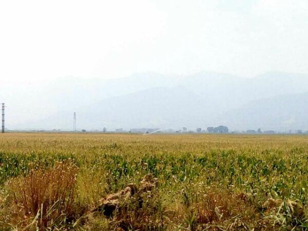 Photo of Наскоро јавен оглас за доделување земјоделско земјиште на сточари