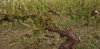 Photo of Во општина Св. Николе пријавиле штета 608 земјоделци