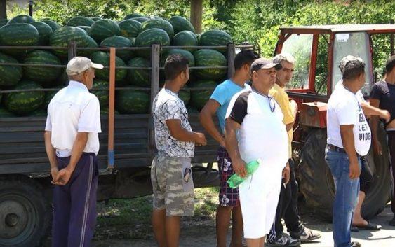 Слаб е интересот на трговците на струмичките лубеници