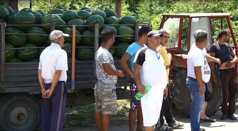 Photo of Слаб е интересот на трговците на струмичките лубеници
