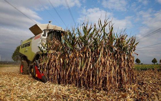 На многу европски земјоделци им се заканува банкрот поради сушата