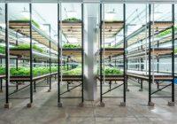 Зошто урбаното земјоделство ја менува иднината на земјоделството