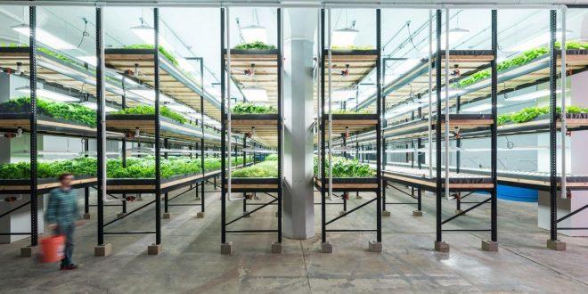 Photo of Зошто урбаното земјоделство ја менува иднината на земјоделството