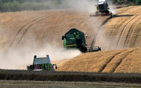 Се зголемија цените за сите житни договори на светските берзи