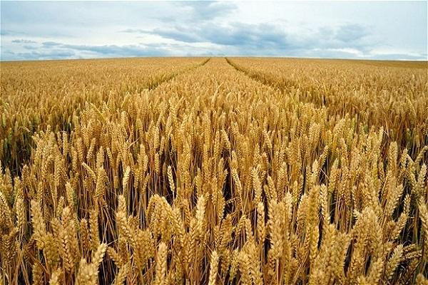 Photo of Житото повторно се зголеми на светските берзи