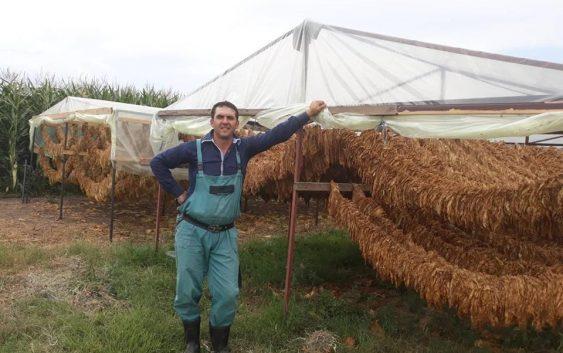 Земјоделието подразбира умешно менаџирање и добра организација, вели Ерџан Али земјоделец од Кравари