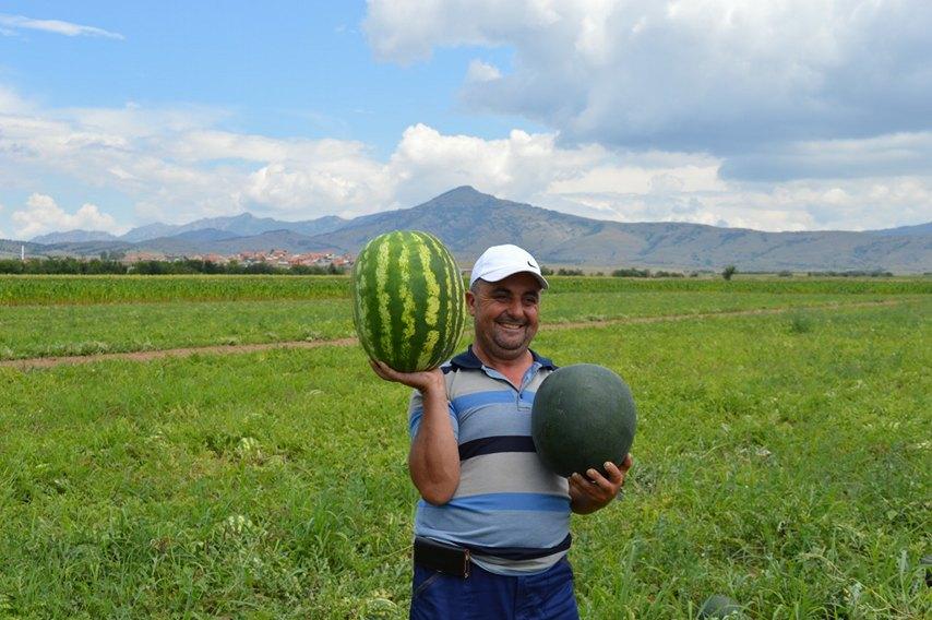 Photo of Земјоделската мака и плодот на вештата рака