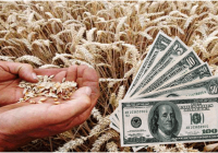 """Сушата во ЕУ """"ја движи"""" цената на пченицата"""