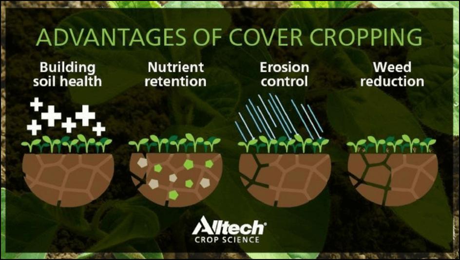 Photo of Разлика помеѓу cover crop и сидерати