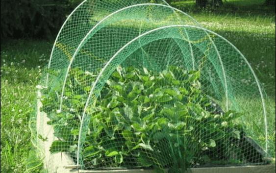 Заштита на зеленчукот и цвеќињата од изгореници со помош на мрежи за засенување